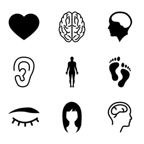 Menselijk lichaam kennisbank